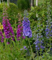 Ogród pełen bylin 10
