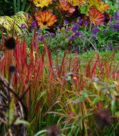 Ogród pełen bylin 13