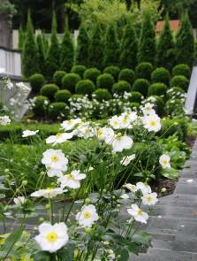 Ogród przy zabytkowym dworku