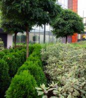 Arkońska Business Park 3