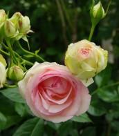 Ogród bardzo romantyczny 4