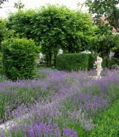 Ogród bardzo romantyczny 11