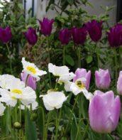 Ogród pełen bylin 7