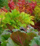 Ogród pełen bylin 15