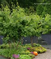 Ogród przy zabytkowym dworku 6